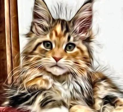 Beautiful-Kitten-Paint.jpg