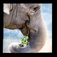 Elephants1.png