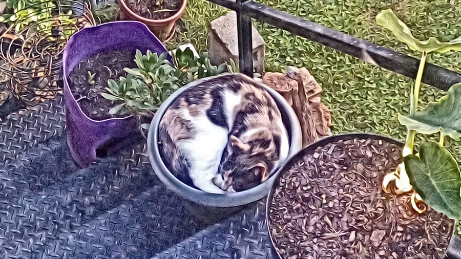 Tessa-plant-nap-painting.jpg