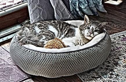 Helen-catbed-sm.jpg