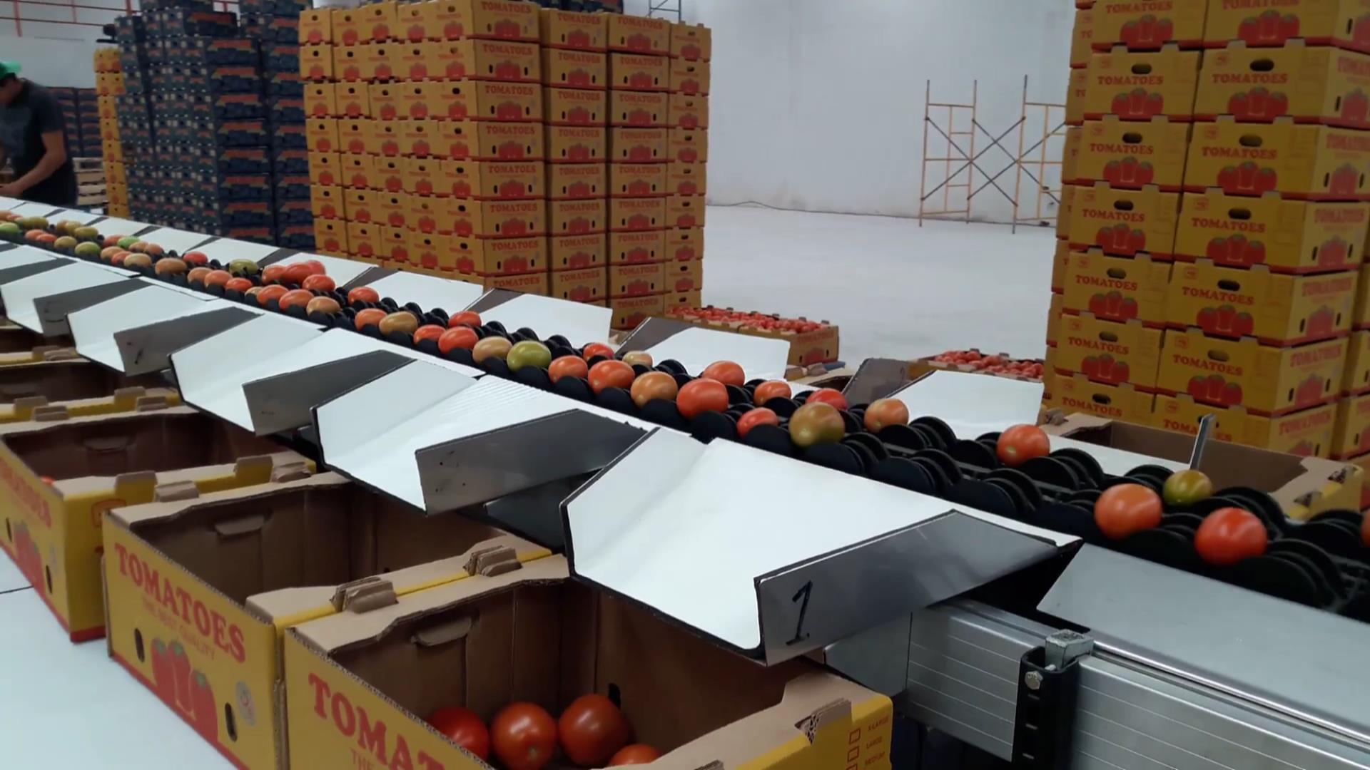 Tomato 02.jpg