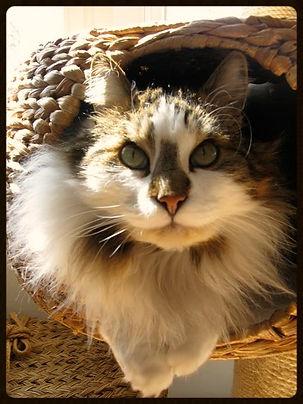 house sitting london, cat sitting london, cat sitter earls court