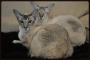 Cat sitter earls court, cat sitter kensington