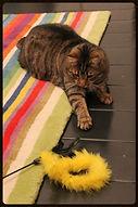 cat sitting london, cat sitter kensington