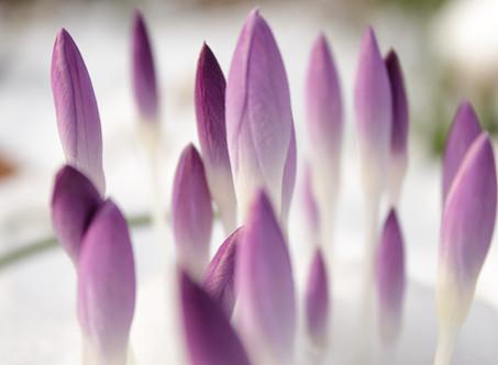 С наступающей весной, милые дамы!