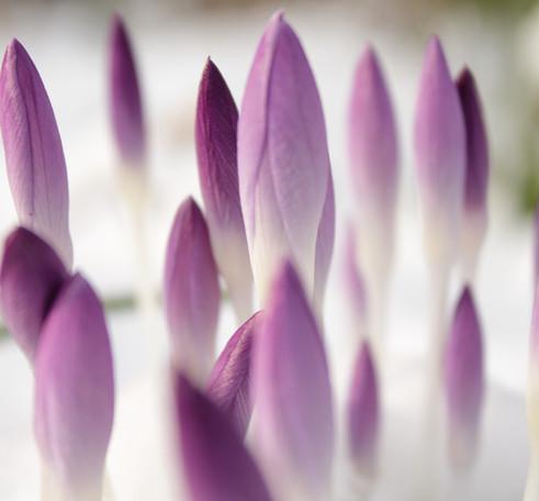 Vårkänslor - Om dejting