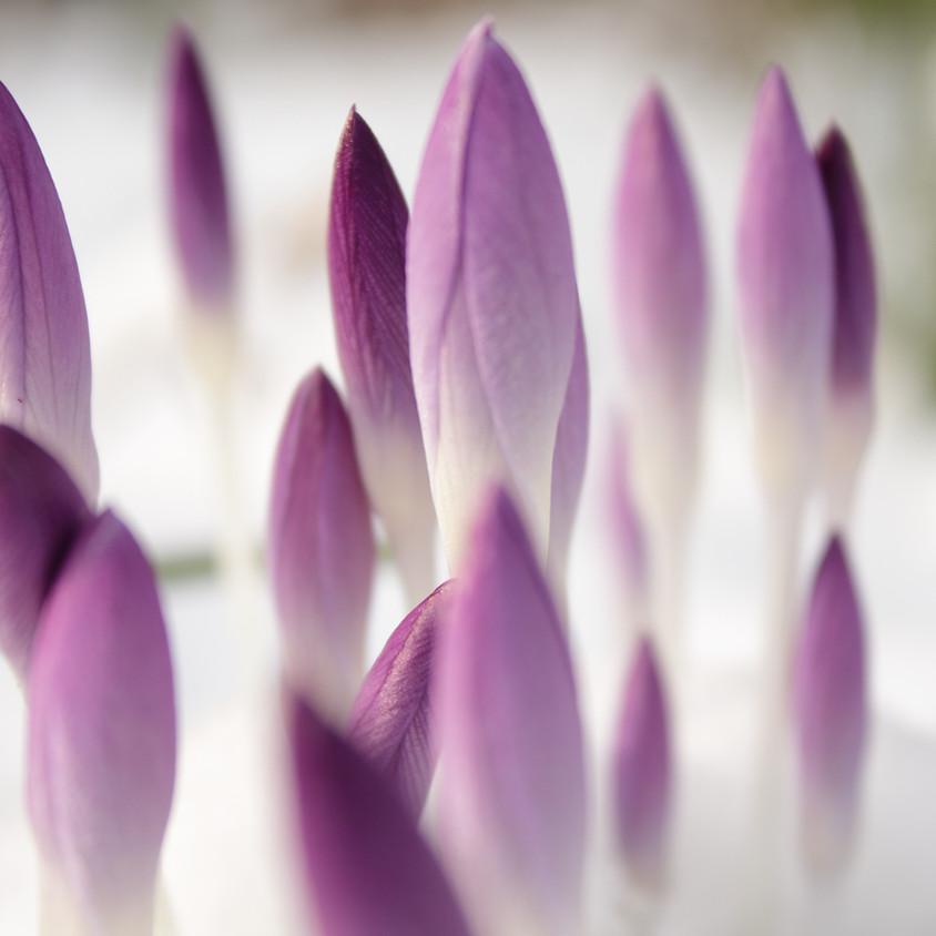 Spring Mindfulness Day