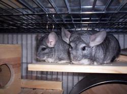 chins cute pair