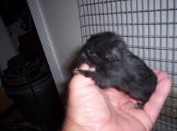 chins baby kit black