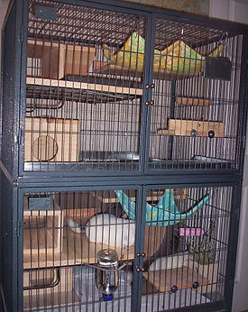 chins shop FN Cage.jpg