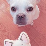 Sadie-Inspired Puppy Macaron