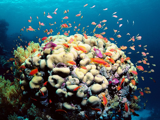 The Great Barrier Reef today, the Sundarbans next?