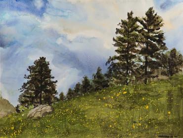Watercolor (2425)