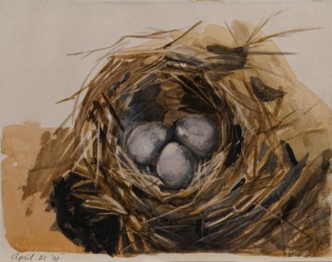 Watercolor (2412)