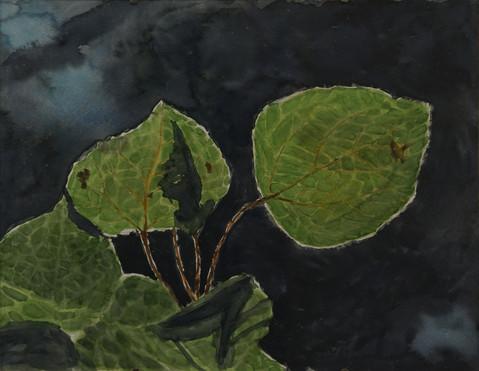Watercolor (2393)