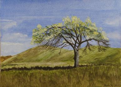 Watercolor (2420)