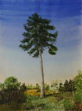 Watercolor (2419)