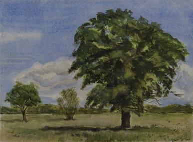Watercolor (2389)