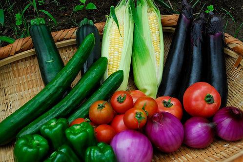 生産者オススメ・旬の採れたて野菜をお任せで発送。