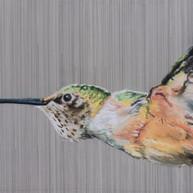 Hospitable Hummingbird, 2019