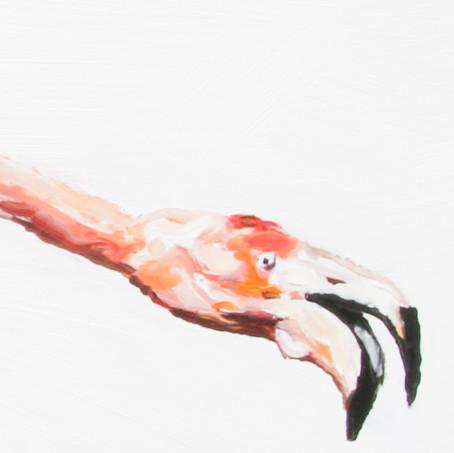 stretching flamingo