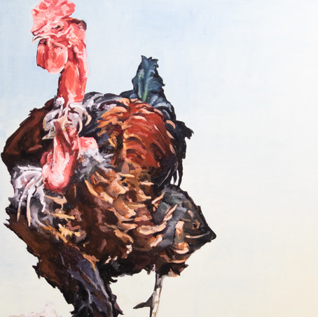 Red-letter Rooster