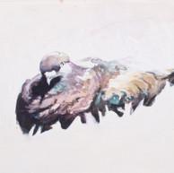 pudgey pidgeon