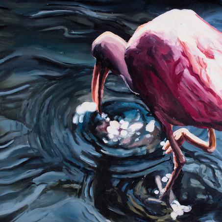 Sifting Ibis