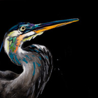 Blue Heron with a Colorful Face