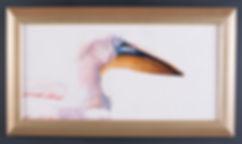 pelican portrait (1 of 1).jpg
