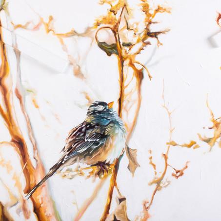 Sparrow in the Garden
