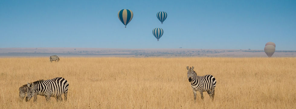 Serengeti Zebra Hot Air Balloon.jpg