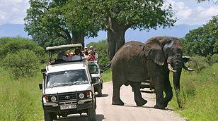 Elephant crossing Tarangire National Park