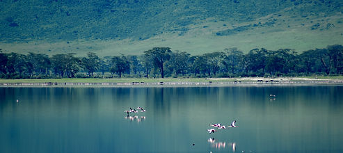 Flamingos flying over Ngorongoro Crater Lake