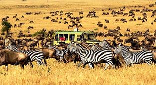 Zebras and Wildebeest Serengeti