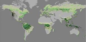 El mapa creado por el WHRC nos muestra cómo los bosques cubren el planeta y es un llamado de alerta para su conservación.