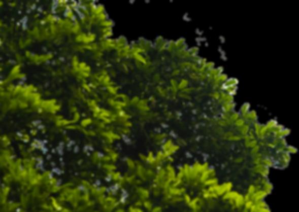 tikal tree transparent_edited.png