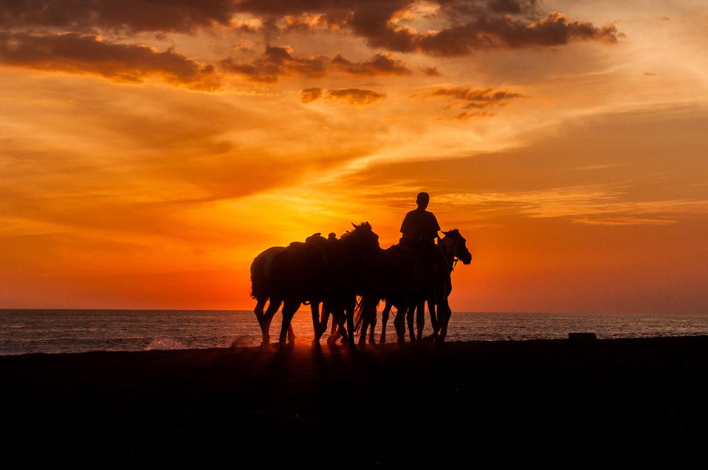 Guatemala Horse