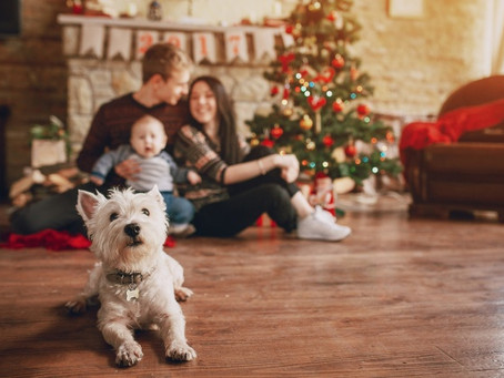 7 cuidados navideños para tu perrito