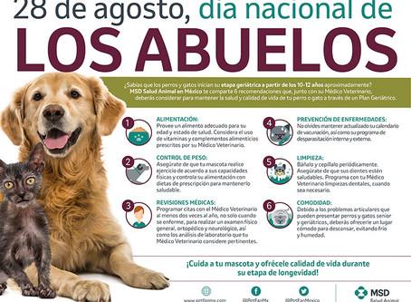Cuidados para perros senior