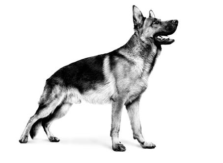 Evita el sobrepeso de tu mascota durante la cuarentena