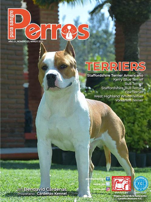 Terriers. Marzo 2021