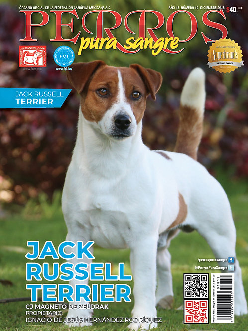 Jack Russell Terrier. Diciembre 2018.