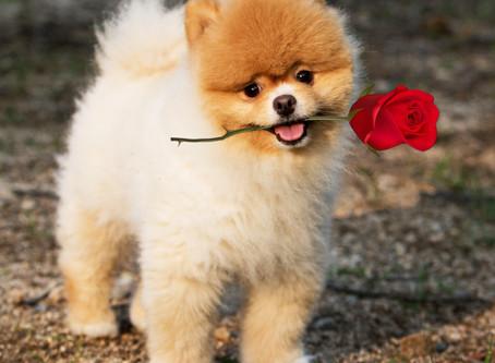 Cinco cosas que no sabías sobre los perros de raza pequeña