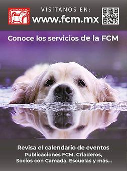 web fcm.jpg