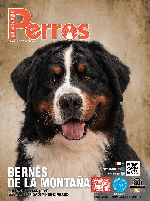 Revista Perros Pura Sangre Bernés de la Montaña