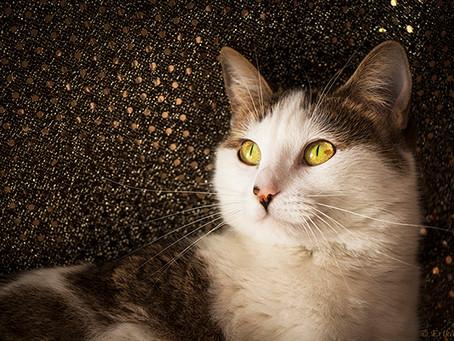 ¿Adoptar un gato? Ronroneos