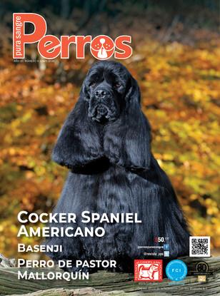 Cocker Spaniel Americano