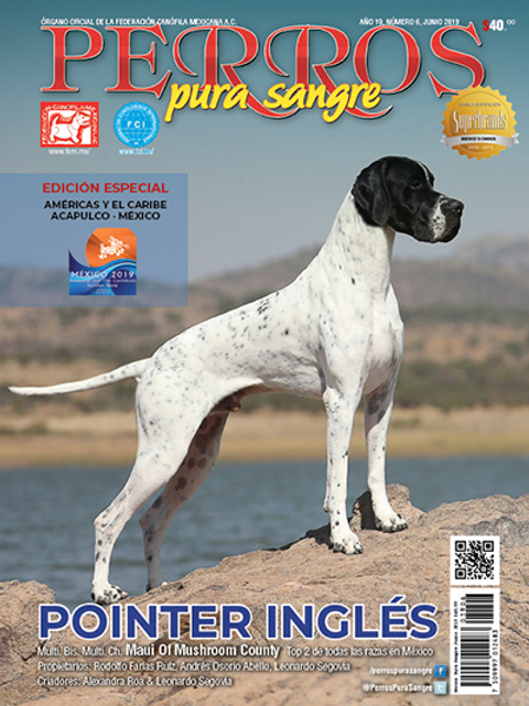 Revista Perros Pura Sangre Pointer Inglés
