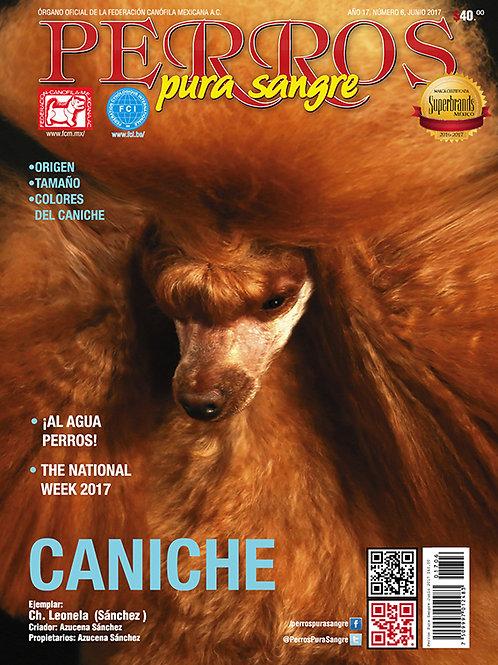 Revista Perros Pura Sangre Caniche